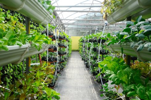 The future of farming: robots, bees and plant jacuzzis